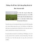 Những vấn đề lưu ý khi chọn giống khoai mì đưa vào sản xuất