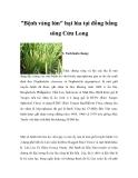 Bệnh vàng lá ở lúa