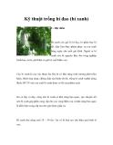 Kỹ thuật trồng bí đao (bí xanh)