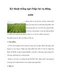 Kỹ thuật trồng ngô (bắp) lai vụ đôngxuân