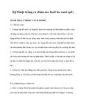 Kỹ thuật trồng và chăm sóc bưởi da xanh (p2)