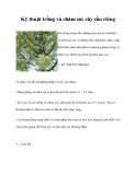 Kỹ thuật trồng và chăm sóc cây sầu riêng