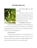 Kinh nghiệm  trồng xoài