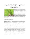 Nguyên nhân gây bệnh vàng lá lúa và biện pháp phòng trừ