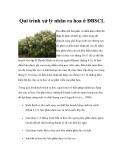 Qui trình xử lý nhãn ra hoa ở ĐBSCL