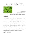 Quy trình kỹ thuật trồng cải xà lách
