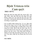 Bệnh Tristeza trên Cam quýt