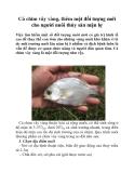 Cá chim vây vàng, thêm một đối tượng mới cho người nuôi thủy sản mặn lợ