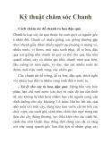Kỹ thuật chăm sóc Chanh