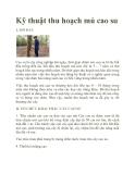 Kỹ thuật thu hoạch mủ cao su