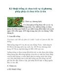 Kỹ thuật trồng cà chua trái vụ và phương pháp ghép cà chua trên cà tím