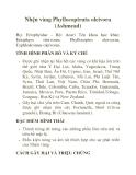 Nhện vàng Phyllocoptruta oleivora (Ashmead)