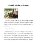 Cân nhắc khi trồng tre lấy măng