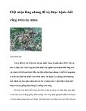 Diệt nhện lông nhung để trị được bệnh chổi rồng trên cây nhãn