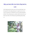 Hiệu quả bước đầu từ mô hình trồng bưởi da xanh
