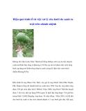 Hiệu quả kinh tế từ việc xử lý cho bưởi da xanh ra trái trên nhánh nhệnh