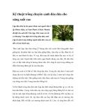 Kỹ thuật trồng chuyên canh dừa dứa cho năng suất cao