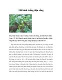 Mô hình trồng đậu rồng