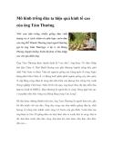 Mô hình trồng dừa ta hiệu quả kinh tế cao của ông Tám Thưởng