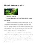 Bố trí cây cảnh trong hồ nuôi cá
