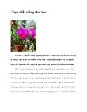 Chọn chất trồng cho lan