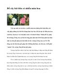 Để cây bát tiên có nhiều màu hoa