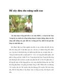 Ðể cây dừa cho năng suất cao