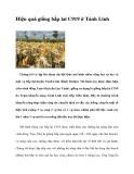Hiệu quả giống bắp lai C919 ở Tánh Linh