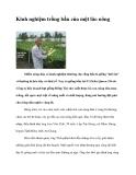 Kinh nghiệm trồng bầu của một lão nông