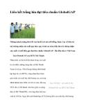 Liên kết trồng lúa đạt tiêu chuẩn Global