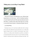 Những mùa củ cải trắng ở Long Phước