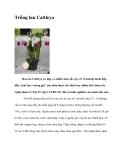 Trồng lan Cattleya
