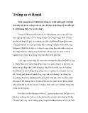 Trồng sơ ri Brasil