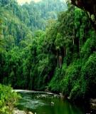 Cần quan tâm đúng mức tới việc bảo tồn đa dạng sinh học hệ sinh thái rừng nhiệt đới