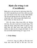 Bệnh cầu trùng ở cút (Coccidiosis)