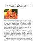 Công nghệ sản xuất giống cây ăn quả có múi sạch bệnh chất lượng cao