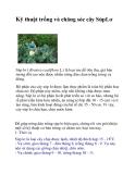 Kỹ thuật trồng và chăng sóc cây SúpLơ