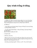 Quy trình trồng ớt đông