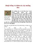 thuật trồng và chăm sóc cây muồng đen