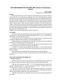 """Nghiên cứu khoa học """" XÁC ĐỊNH NHANH TUỔI CÂY MÂY NẾP (Calamus tetradactylus Hance) """""""