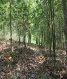 Quy trình kỹ thuật trồng rừng sao đen (Hopen odorata R.)