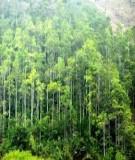 Quy trình kỹ thuật trồng rừng Luồng