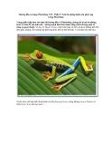 Hướng dẫn sử dụng Photoshop CS5 - Phần 9: Xóa bỏ những hình nền phức tạp trong Photoshop