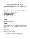 Bệnh thối loét cá chua (Bacterial canker of tomato)