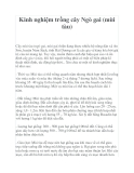 Kinh nghiệm trồng cây Ngò gai (mùi tàu)
