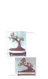Nghệ thuật Bonsai, cây cảnh part 2