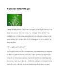 Canh tác hữu cơ là gì?