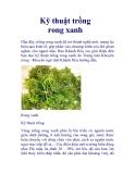 Kỹ thuật trồng rong xanh