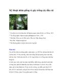 Kỹ thuật nhân giống và gây trồng cây dầu rái