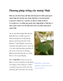 Phương pháp trồng cây mướp Nhật